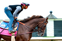 Equestrian, Thoroughbred, Lexington KY, Keenland, Morning workout, Horses, Horse and rider, Horse racing
