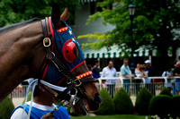 Arlington Park, Horse, Horse racing, Paddock, horses, Thoroughbred
